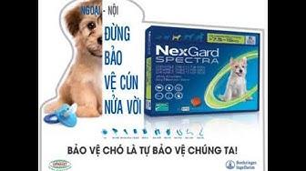 Bảo vệ chó là bảo vệ chúng ta - Nexgard Spectra & Nexgard - Siêu giải pháp cho ve, ghẻ, bọ chét