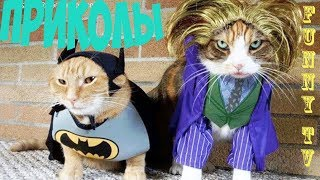 Приколы с Котами — Лучшие приколы с котами и кошками коты смешное видео