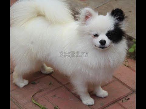 Купить щенка -