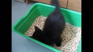 Котёнок ходит в лоток
