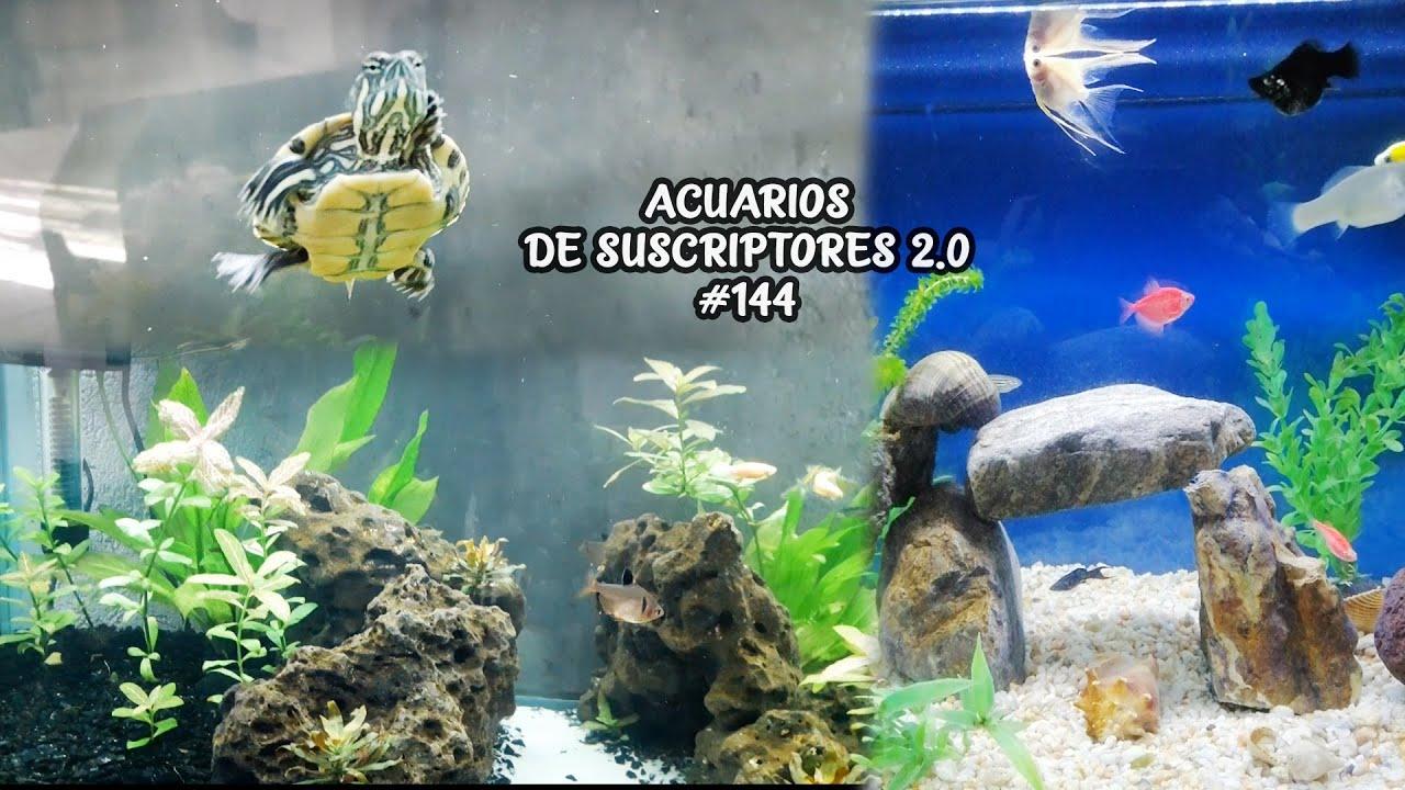 ACUARIOS DE SUSCRIPTORES 2.0 #144 | Tortuga, Pez GoldFish, Pez Escalar | AcuariosLP