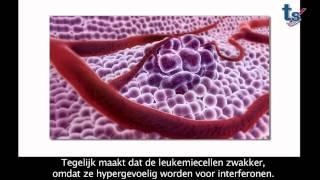 La Fondation Salus Sanguinis : vaincre la leucémie et les maladies du sang