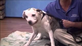 3TV Pets on Parade (KTVK) Saturday, April 5 / Fix. Adopt. Save Awareness Day!