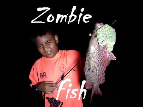 Palau Zombie Fish