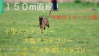 2015年4月12日 野田スポーツ公園 にて 150m直線! ルアーコー...