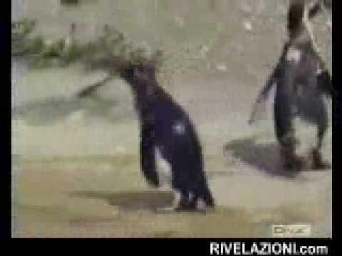 029 pinguino fatto