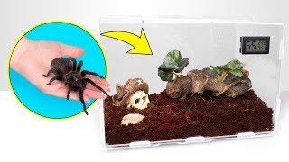how tarantulas grow a perfect spider house