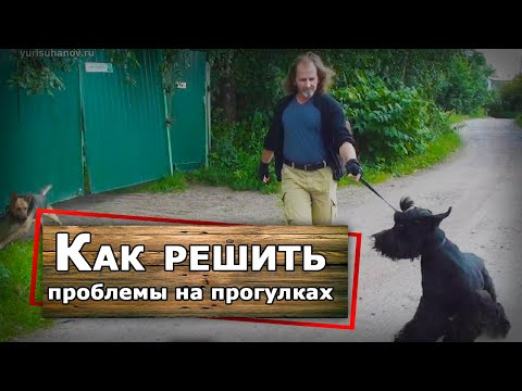 Русский черный терьер на прогулке - коррекция поведения
