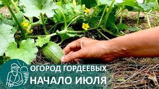 ☘ Огород Гордеевых в июле — летняя экскурсия по приусадебному участку