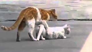 Кот и кошка прикольно
