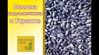 Семена Подсолнечника Купить в Украине от Агроэксперт-Трейд