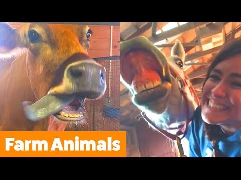 Funniest Farm Animals | Funny Pet Videos