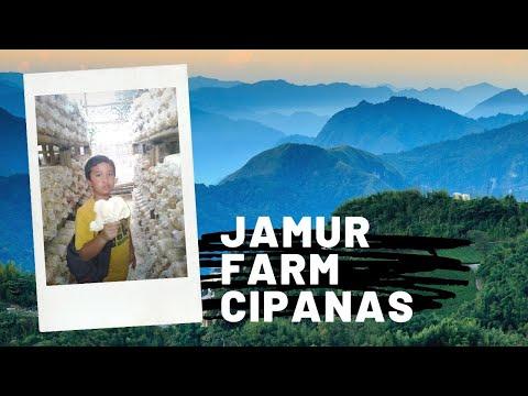 jamur-farm-cipanas---tanah-murah-kavling-budidaya-jamur-tiram-di-cipanas-puncak---0817-0836-756