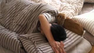朝だよ!起きて!(・ × ・)モフモフなうさぎ目覚まし