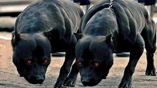 Las 10 Mejores Razas De Perros Con Las Mandíbulas Más Fuertes