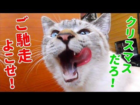 ムシャムシャと美味しそうにご馳走を食べる猫を見てたら飼い主のお腹もグーと鳴りました