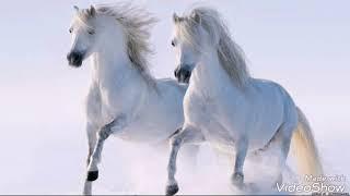 Фото красивейших  лошадей