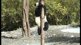 Jiuzhaigou and Wolong National Parks - Sichuan - China - part 3.mpg