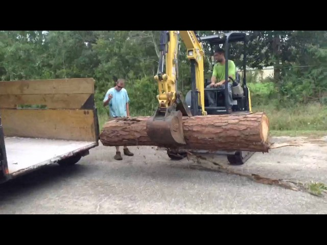 Pine log loading yanmar 25 mini x