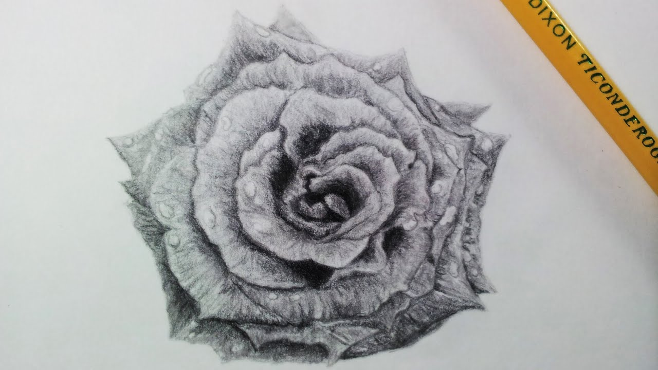 Drawing a Realistic Rose - Time Lapse - YouTube