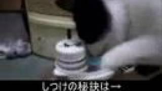 猫のしつけの秘訣はこちら http://infomagic.xsrv.jp/info/indexc.htm.