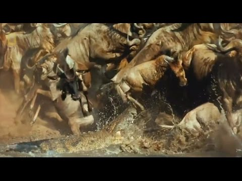 The Great Serengeti - Wild Animal Documentary  - National Geographic