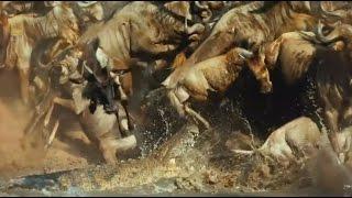 The Great Serengeti - Wild Animal Documentary  - National Geographic