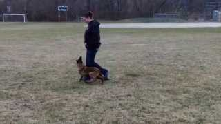 Black Jack K9 Puppy Training Algonquin Illinois Aleta