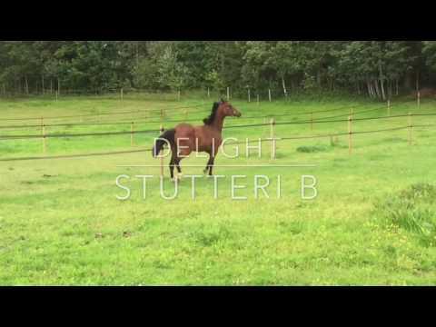 Ny unghest på Stutteri B: Piaffs Delight. Hoppe født 2015 etter Blue Hors Don Olymbrio.