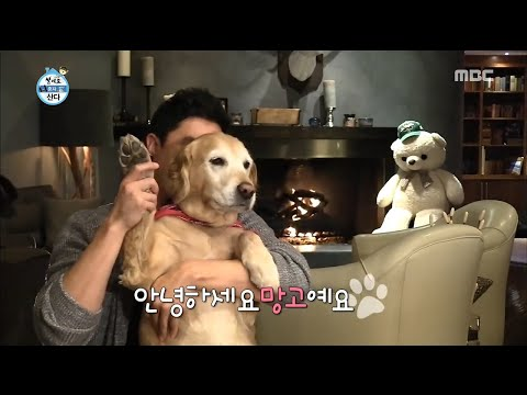 I Live Alone 나 혼자 산다 Daniel Henney's dog, mango I was born in  Yeouido. 20170130