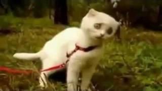 Дьявольский Кот !!!! Ржач полный...mp4