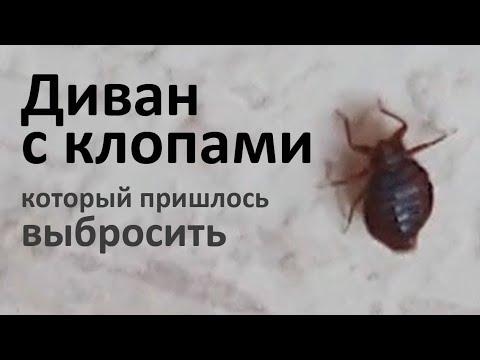 Видео: Когда диван с клопами приходится выбрасывать, Новокосино, Москва
