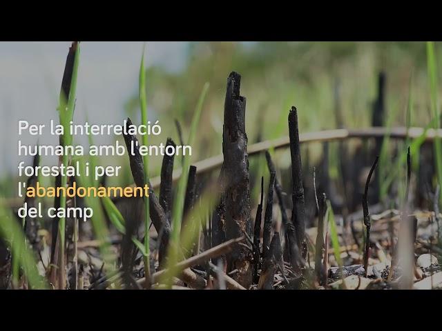 Dia Mundial de la Lluita contra la desertificació i la sequera