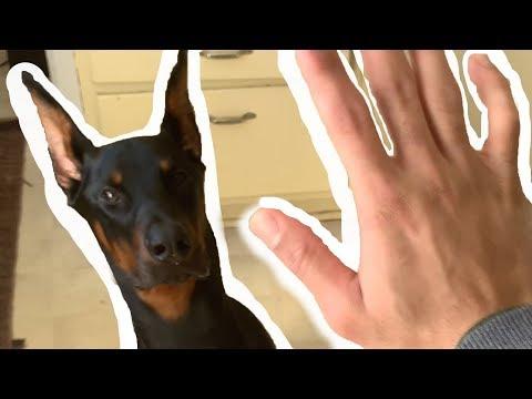 MY DOG ATE MY WHAT?! |  Derek554 2019 Monthly Vlog