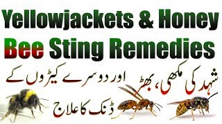 Yellowjackets and Honey Bee Sting Remedies To Reduce Swelling and Pain