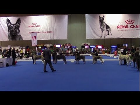 2018 AKC National Owner-Handled Series Finals - Irish Wolfhounds