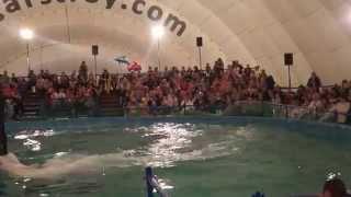 Шоу Дельфины и белые киты