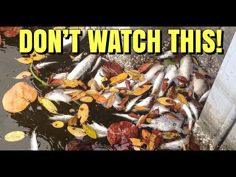 YOU WILL NEVER BUY ANOTHER FEEDER FISH AFTER WATCHING THIS VIDEO