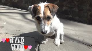WMAD VOTE for Jesse Support! & Useful Dog Tricks 4 Teaser!