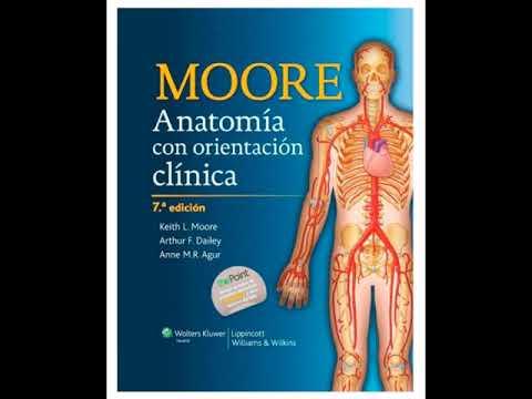 Descargar Anatomia de Moore 7ª Edición por Dropbox - YouTube