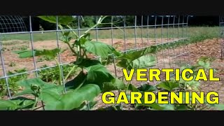 Vertical Gardening Using Grow Arches
