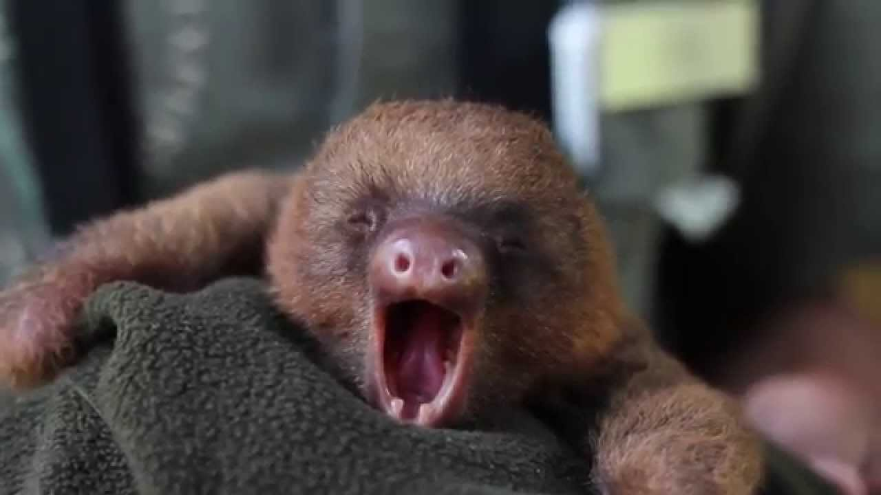sleepy animals meme - 1024×576