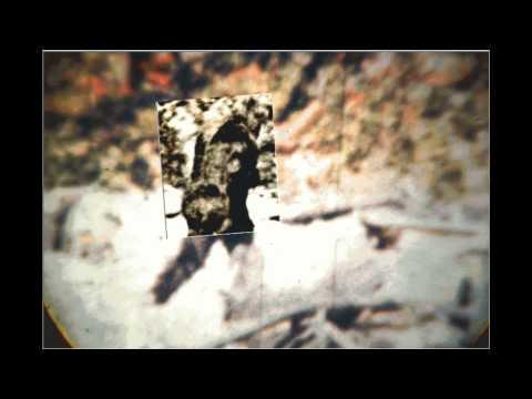 Argosy comparison clip from the Patterson Bigfoot film.
