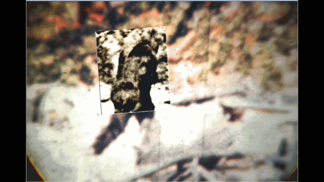 Argosy Comparison Clip From The Patterson Bigfoot Film