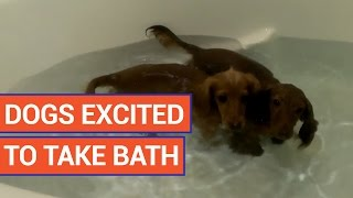 Dog Excited To Take Bath Video 2016 | Daily Heart Beat