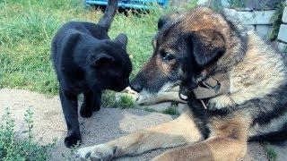 Грустное видео. Собака умирает.