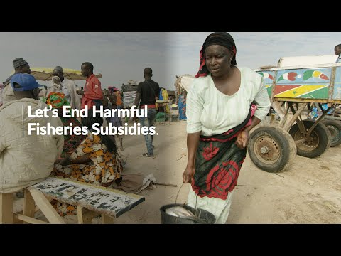 Perspective From A Senegalese Fish Seller: Ending Harmful Fisheries Subsidies