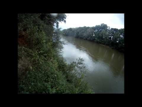 Dan River Catfish