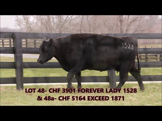 Cardinal Hill Farms Lot 48 PAIR