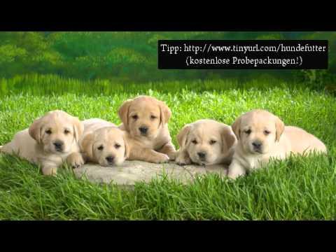 Youtube Hunde